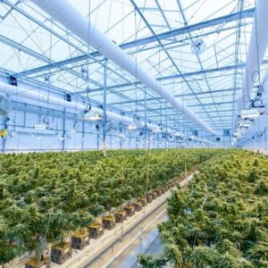 Grow More Cannabis In A Smaller Place